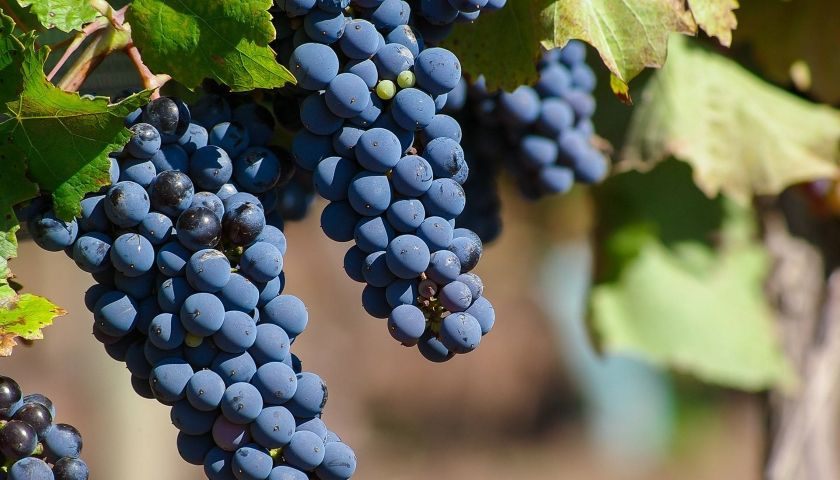 Top 10 Destinations in Puglia for Foodies and Wine Lovers img 40
